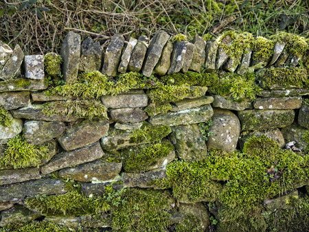 copse: Moss Covered Drystone Wall built without cement that lasts for hundreds of years in Lancashire England