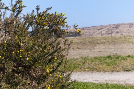 lancashire: Rossendale Valley Moorland In Lancashire England