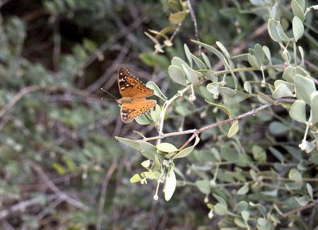 sonora: Butterfly in the Arizona Sonora Desert Museum South of Phoenix Arizona USA Stock Photo