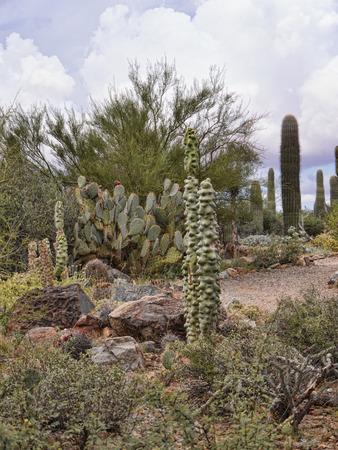 sonora: Arizona Sonora Desert Museum South of Phoenix Arizona USA
