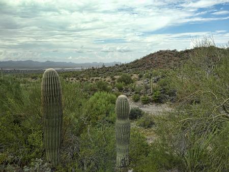 sonora: Cactus at The Arizona Sonora Desert