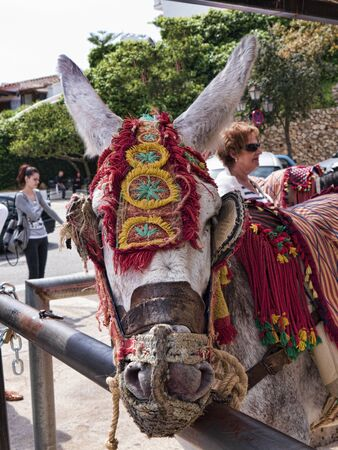 pack animal: The Donkey Taxi in Mijas Andalucia Spain