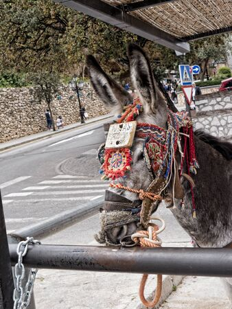house donkey: Donkey Taxis in Mijas Andalucia Spain Stock Photo