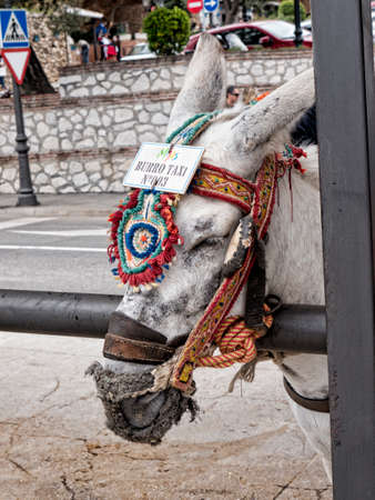 andalucia: Donkey Taxis in Mijas Andalucia Spain Stock Photo