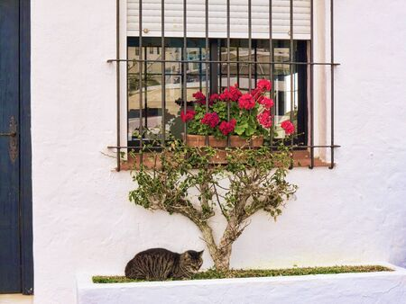 sol: Cat on Harbour in Puerto Banus on the Costa Del Sol, Andalucia, Spain. The playground of the rich and famous