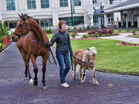 kentucky derby: Horses at Churchill Downs home of the Kentucky Derby in Louisville USA