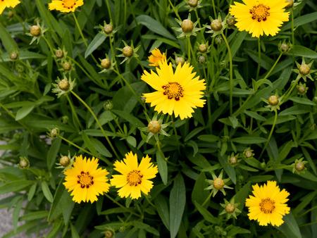 brenda kean: Flowers in Garden in Bardstown Kentucky USA