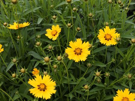 kentucky: Flowers in Garden in Bardstown Kentucky USA