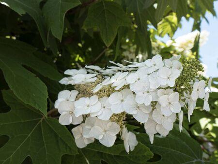tennesse: Flores en un lugar de vacaciones Gatlinburg, Tennessee EE.UU.
