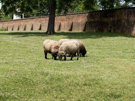 george washington: Sheep at Mount Vernon was the plantation home of George Washington, first President of the United States. The estate is situated on the banks of the Potomac River in Fairfax County, Virginia,