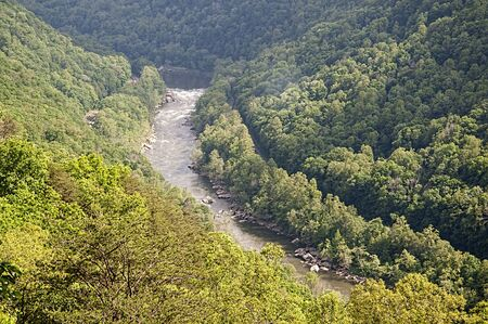 west virginia trees: New River Gorge in Babcock State Park West Virginia USA