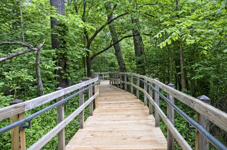 west virginia trees: Wooden Walkway in Babcock State Park West Virginia USA Stock Photo