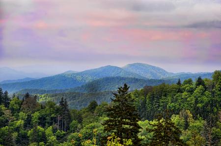 Part of the Appalachian Trail through the Smokey Mountains USA