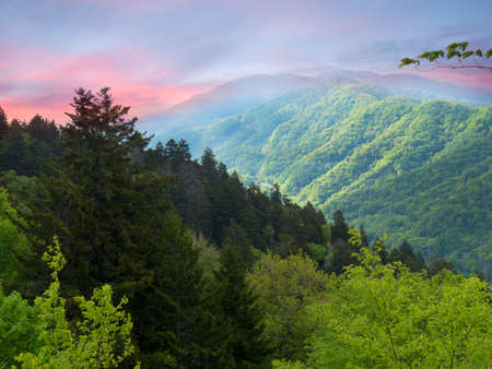 appalachian: Part of the Appalachian Trail through the Smokey Mountains USA