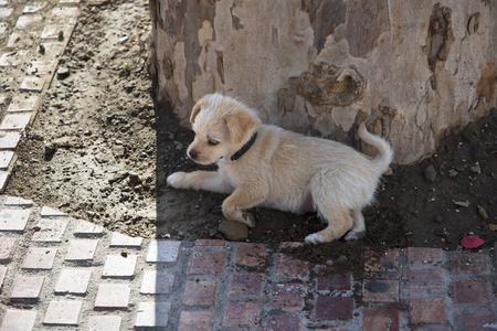 europa: Little Puppy on the Balcon de Europa Nerja Spain Stock Photo