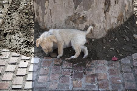 balcon: Puppy in the Balcon de Europa Spain