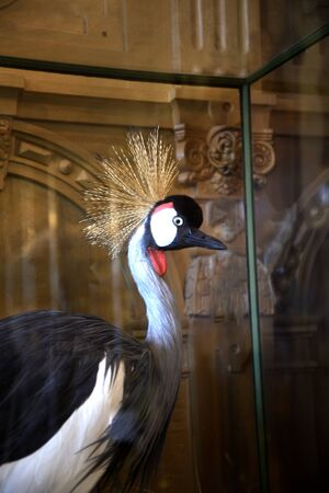 jacobean: Crane in glass case  in Temple Newsam House in Leeds Yorkshire Editorial