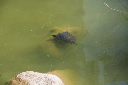 conceived: Turtles at Monserrate Palace and the gardens was conceived by an English architect, James Knowles Jr.as a summer residence for the Cook Family Stock Photo
