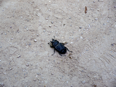 palatial: Beetle in the Monserrate Palace which  is an exotic palatial villa and Gardens located in Sintra, Portugal, the traditional summer resort of the Nobility Stock Photo