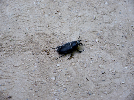 nobility: Beetle in the Monserrate Palace is an exotic palatial villa and Gardens located in Sintra, Portugal, the traditional summer resort of the Nobility