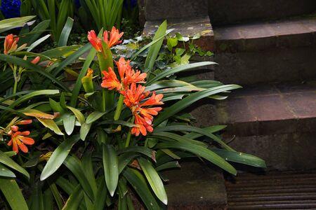 marqueteria: Flores en el hotel Garden en Sorrento Italia