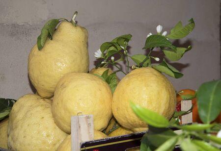 sant agata: Lemons in Sorrento Italy Stock Photo