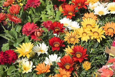 marqueteria: Flores en el mercado en Sorrento Italia