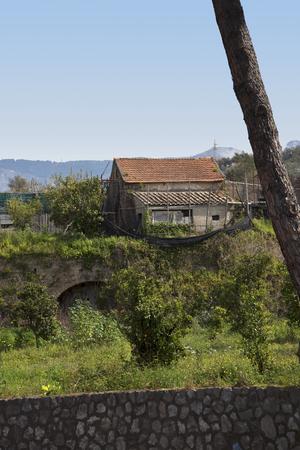 marqueteria: Lim�n y campo de naranjos en Sorrento Italia