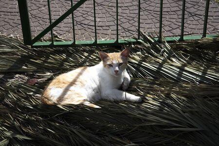 sunning: Lazy Cat sunning itself in Sorrento Italy Stock Photo