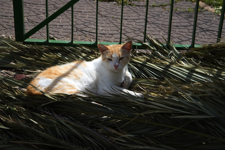 marquetry: Lazy Cat sunning itself in Sorrento Italy Stock Photo
