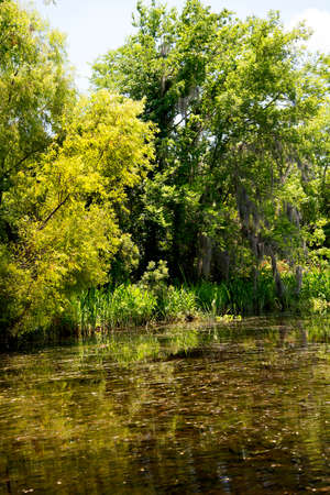 bayou: on a swamp boat tour of the Bayous outside of New Orleans in Louisiana USA