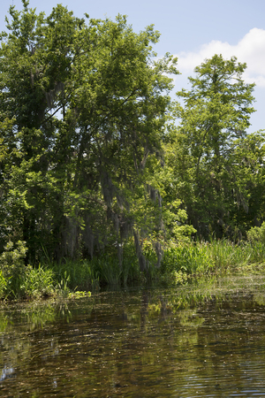 bayou swamp: On a swamp boat tour of the Bayous outside of New Orleans in Louisiana USA Stock Photo