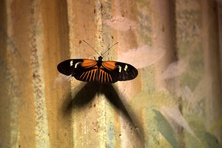 Butterfly in the Museum of Natural History in New Orleans Louisiana USA