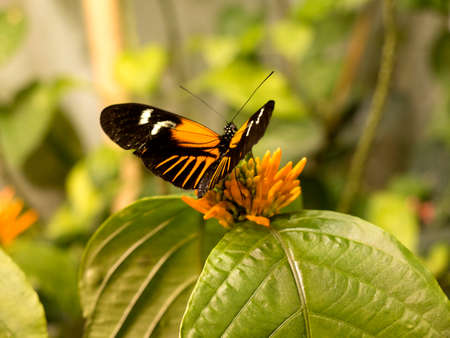 The Butterfly House in the Natural History Museum in New Orleans in the State of Louisiana Stock Photo