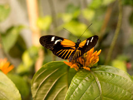 natural history museum: The Butterfly House in the Natural History Museum in New Orleans in the State of Louisiana Stock Photo