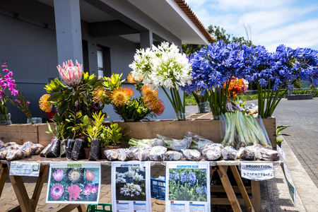 Plant sale of traditional Plants of the Island of Madeira 新聞圖片