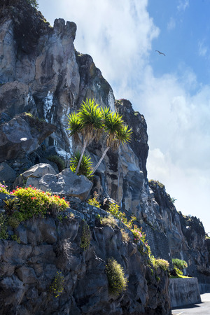 Cliffs by quayside in Camara de Lobos a fishing village near the city of Funchal Madeira