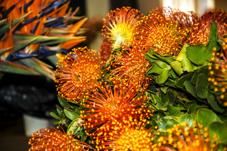 Bright Orange Spikey Flowers on the Market in Funchal Madeira