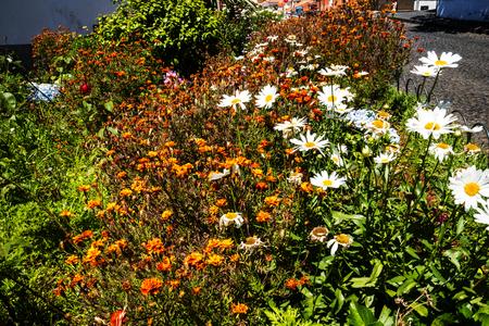 esfinge: Flores en Garden at Monte sobre Funchal Madeira Portugal