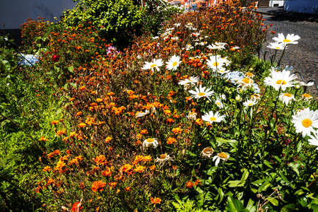 Flowers in Garden at Monte above Funchal Madeira Portugal