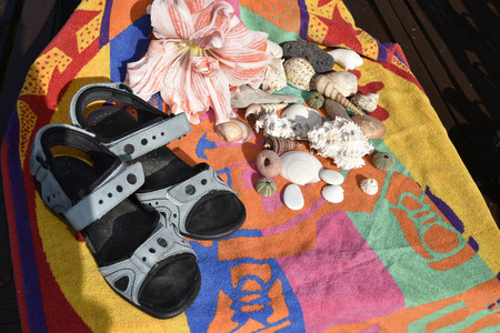Amaryllis Flower with sandals, shells and beach towel