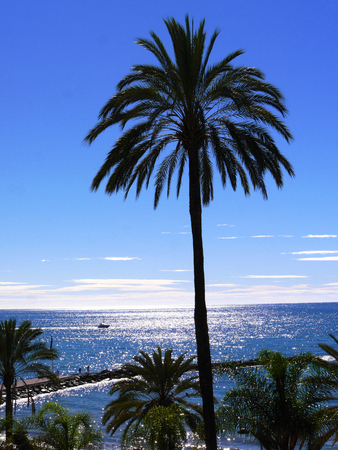 Palm tree overlooking the beach in Marbella Andalucia Spain