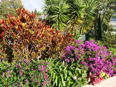 Flowers and Plants on the Island of Madeira Portugal
