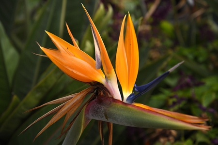 Madeira is the island of Flowers with flowers growing in every nook and cranny.