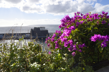 Madeira is the island of Flowers  with flowers growing in every nook and cranny. The island is a riot of colour Stockfoto