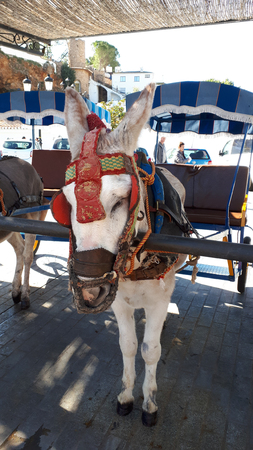 Donkey Taxis take tourists on short rides through the mountain village of Mijas in Andalucia. Authorities are supposed to monitor the animal's welfare