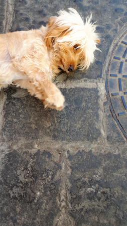 Mop Haired Dog at cafe in the old walled Town of Rhodes in Greece Stock Photo