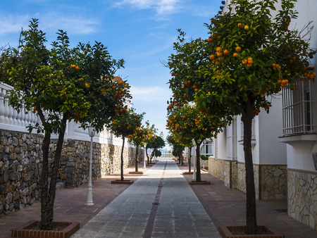 Street lined with orange trees in January in Nerja Andalucia Spain