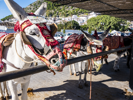 Donkey Taxi in the mountain village of Mijas in Southern Spain