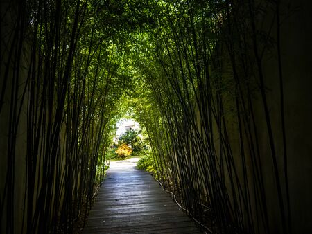 Tunnel of Bamboo in a garden in Funchal on the island of Madeira